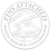Fins Attached Logo